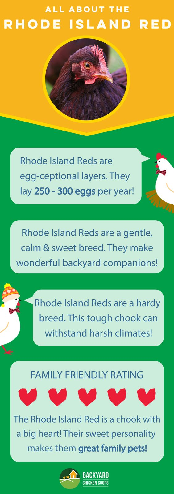All About The Rhode Island Red